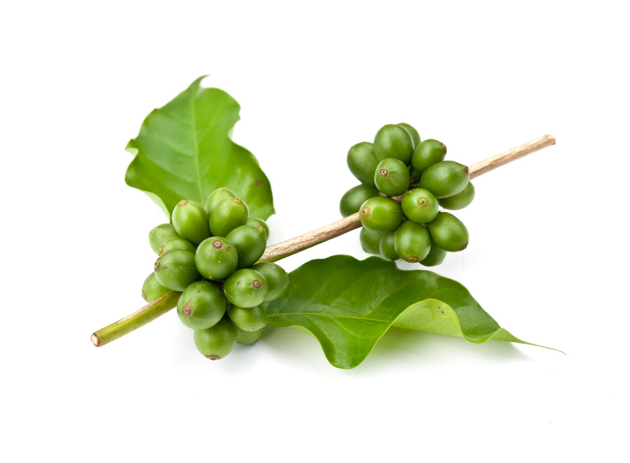 where to buy green coffee bean extract manufacturer &suppliers, Skeleton