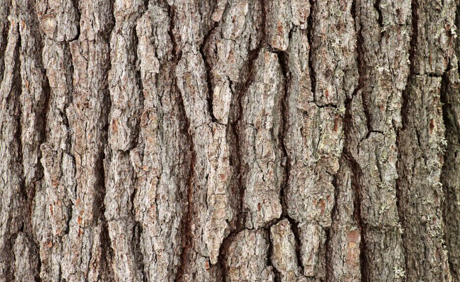 Where to buy Pine bark extract manufacturer &suppliers