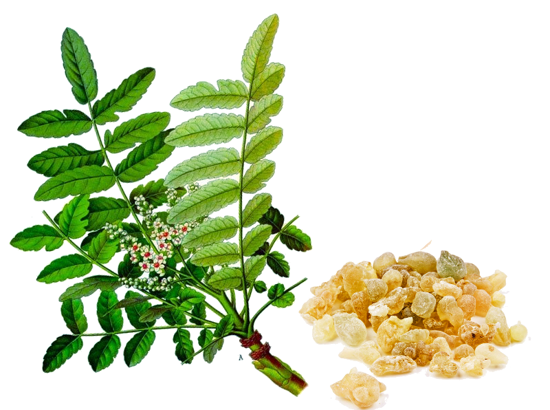 Number Plate Suppliers >> Where to buy Boswellia Extract manufacturer &suppliers