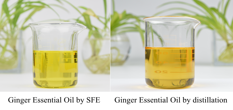 Where to buy Ginger Essential Oil manufacturer &suppliers